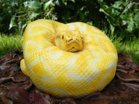 Spooky Snake Cake